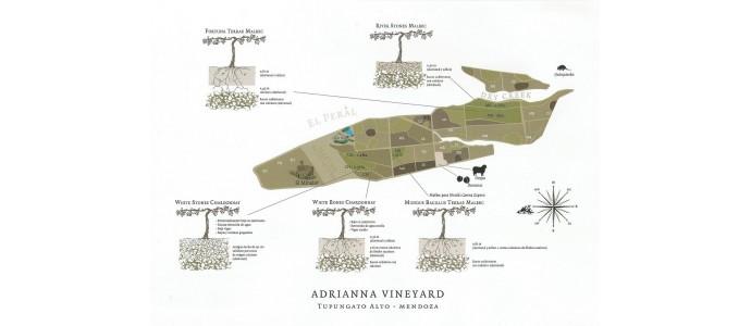 Vino de Parcela, Adrianna Vineyards by Bodega Catena Zapata   y sus elegantes microorganismos!